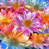 彩绘鲜花图片-彩绘鲜花壁纸图片大全