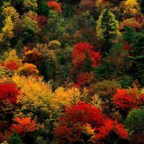 秋天的红叶美景iPad壁纸