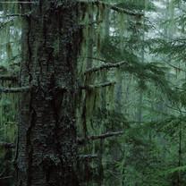 千姿百态的树木iPad壁纸