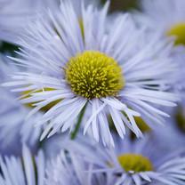高清风景植物iPad壁纸