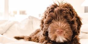 宠物狗高清图片壁纸