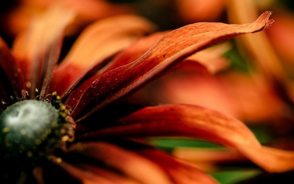 柔美高清的花儿图片壁纸3