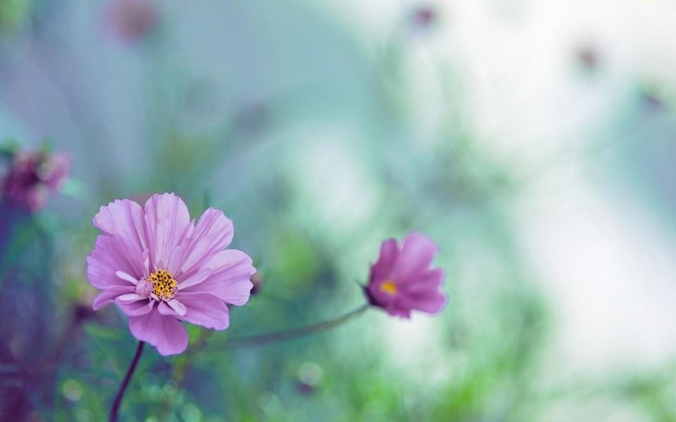 小清新鲜花图片-小清新鲜花图片大全