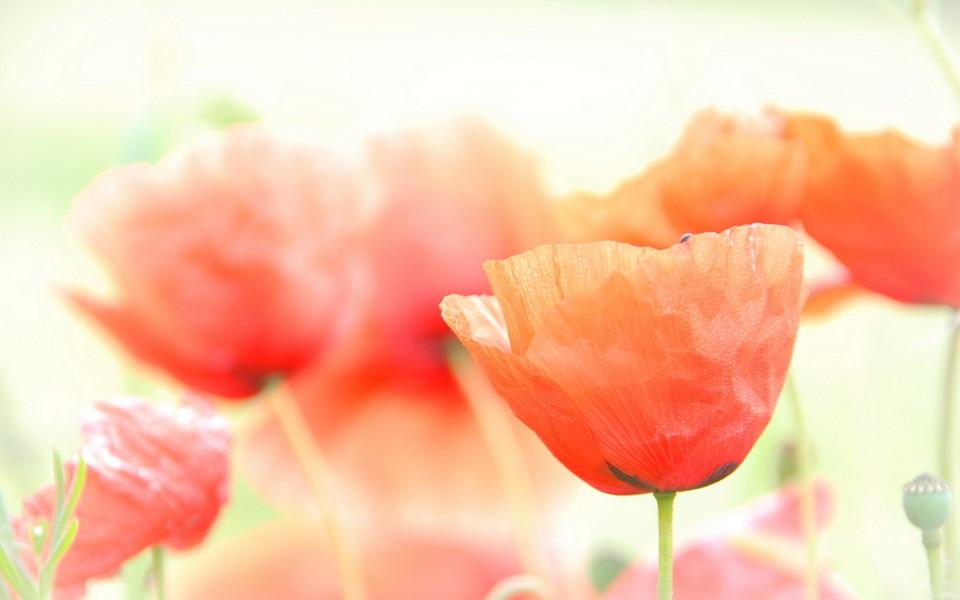 唯美高清的花儿图片壁纸大全