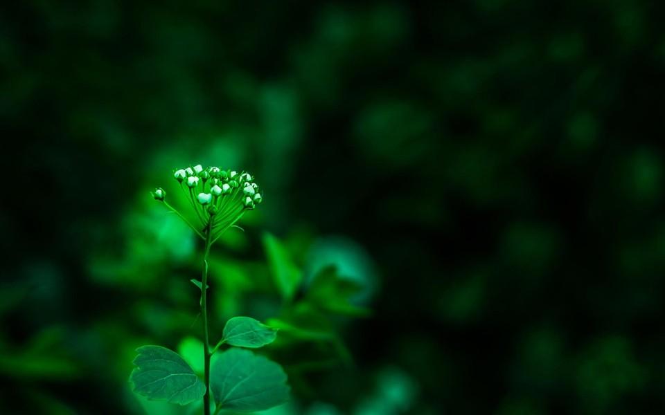 堡垒之夜壁纸_绿色植物清爽桌面壁纸 第10页-ZOL桌面壁纸